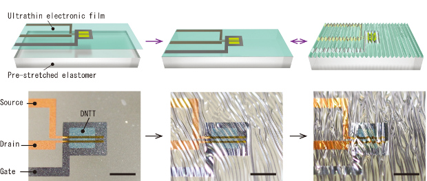 Schematic illustrations (top) and photographs (bottom) of manufacturing process of stretchable organic transistor integrated circuits